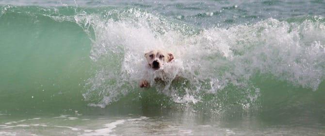 Cane in acqua con un onda